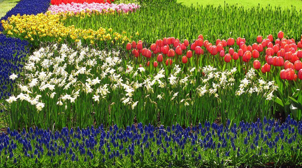 r many flowers.jpg