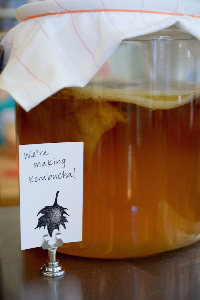 London Plane kombucha.jpg