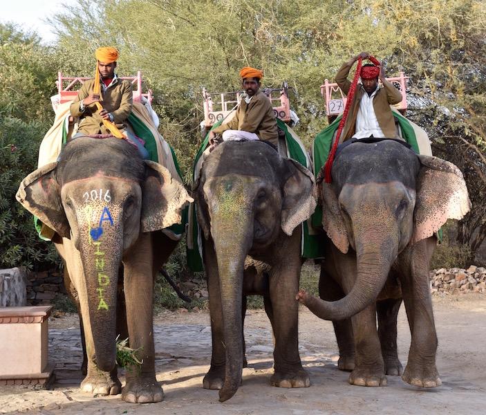 Dera Amer elephant ride