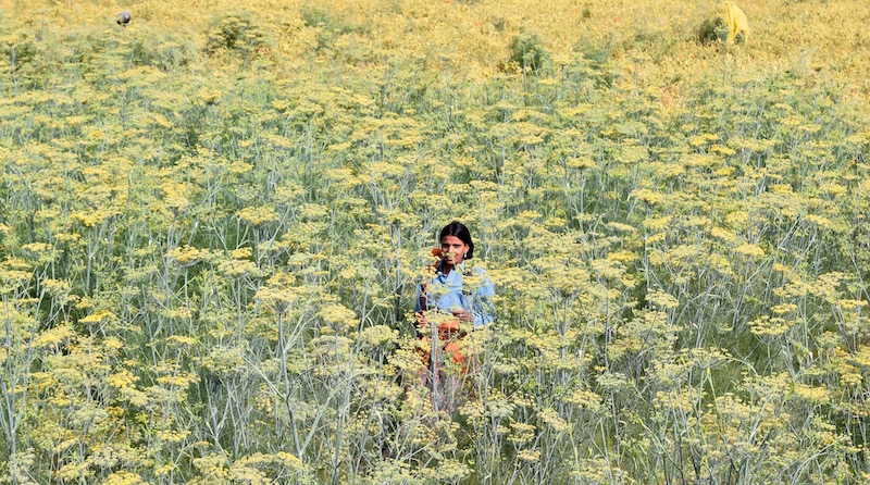 Indian woman in field