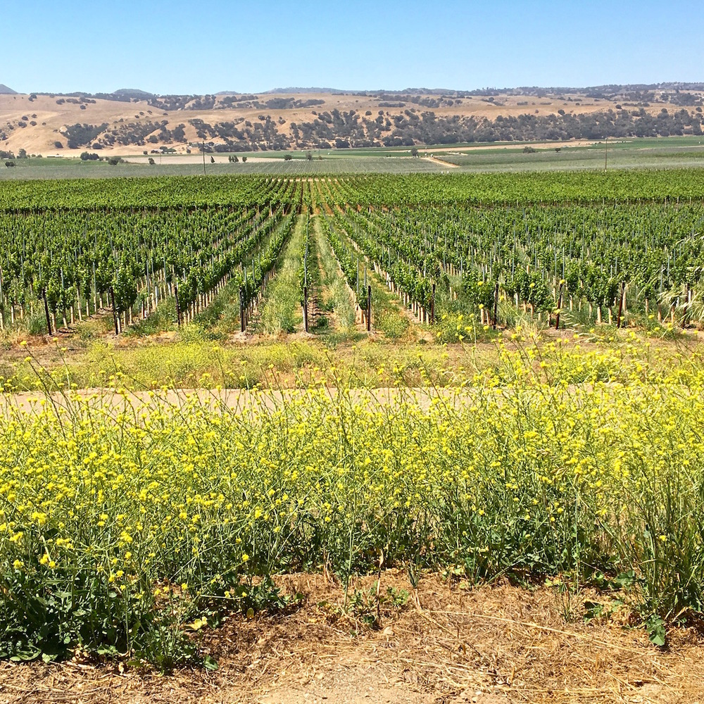 Santa Maria Vineyards
