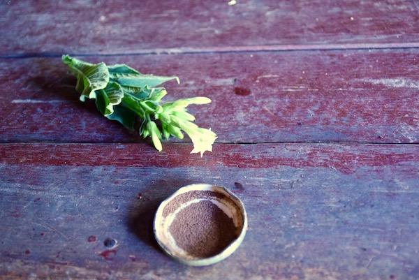Tobacco plant vinales.jpg
