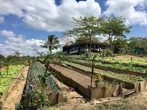 Finca Agroecologica Vinales organic restaurant.jpg