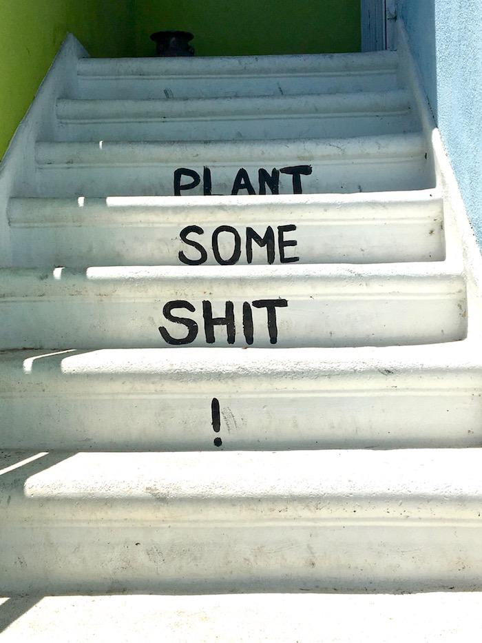 Gangsta Gardener plant some shit.jpg