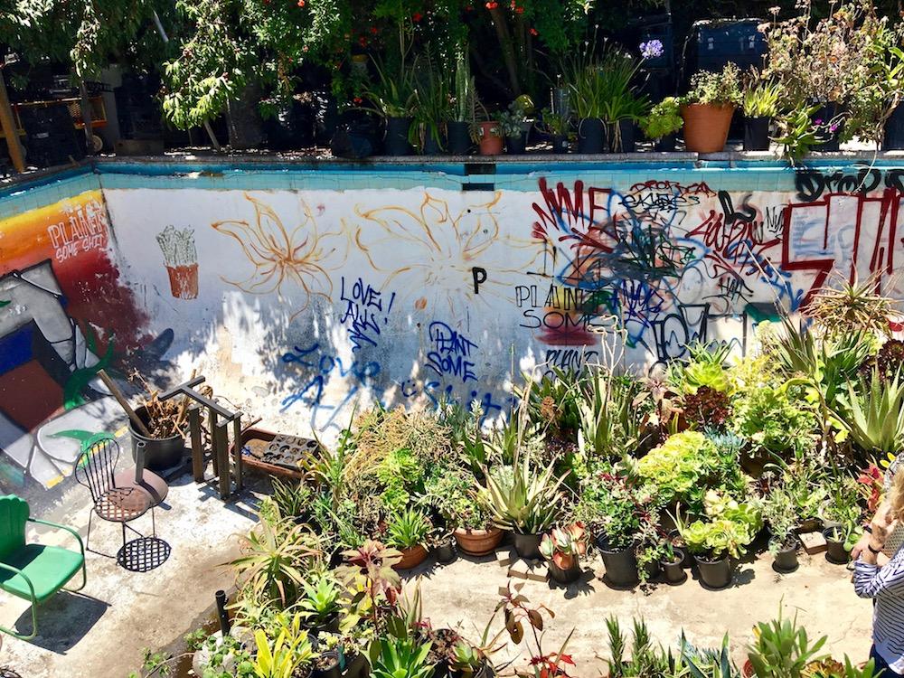 Gangsta Gardener pool yard.jpg