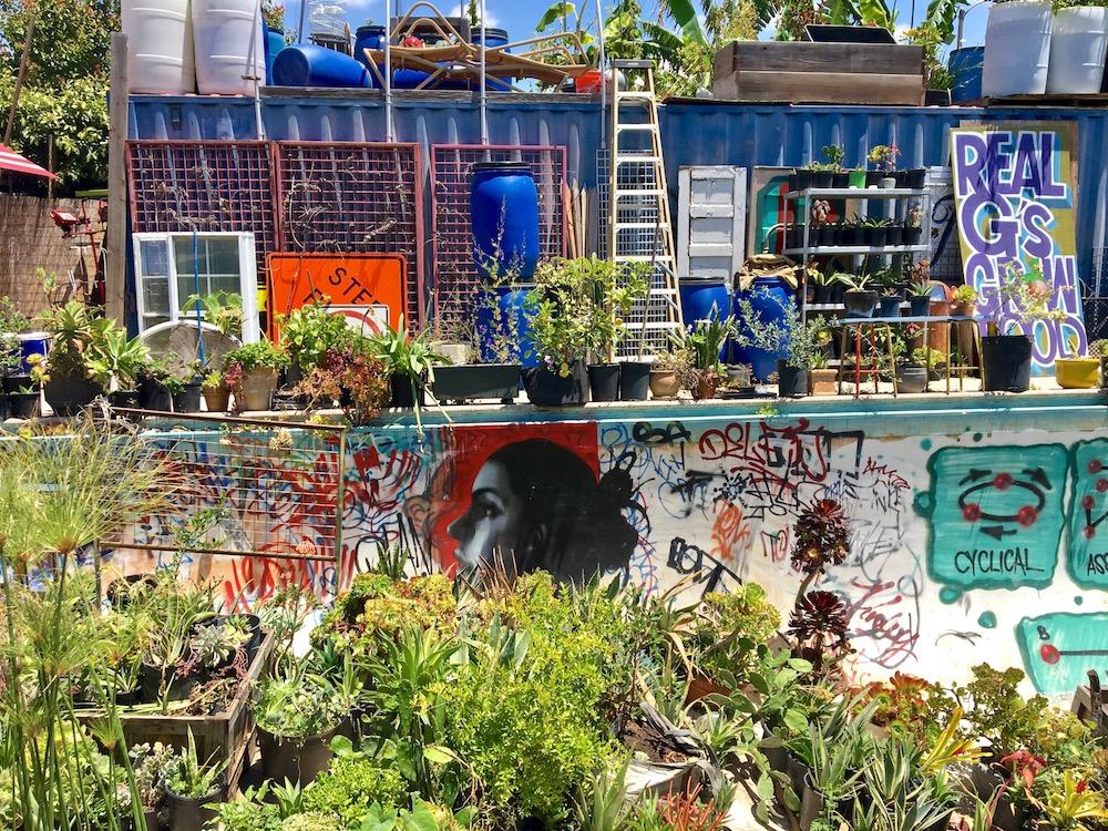 Gangsta Gardener pool art.jpg