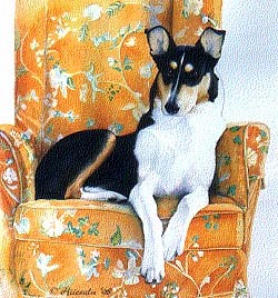 """English Collie Sitting On Couch"" 22 x 28"""