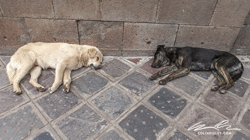 Peru_Cusco_Two Dogs.jpg