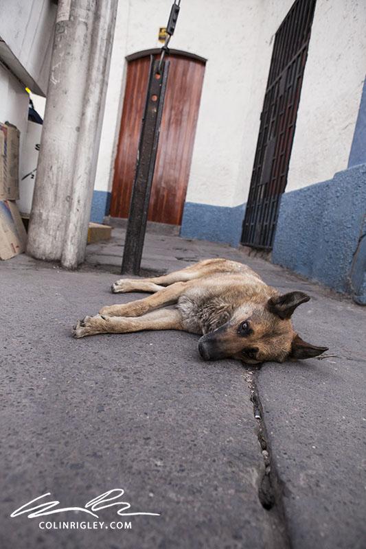 Peru_Arequipa_Dog.jpg
