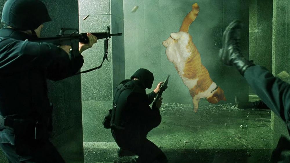 Sleepy Matrix Cat.jpg