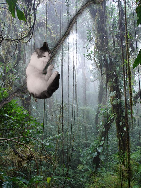 Sleepy-Tarzan-Cat.jpg