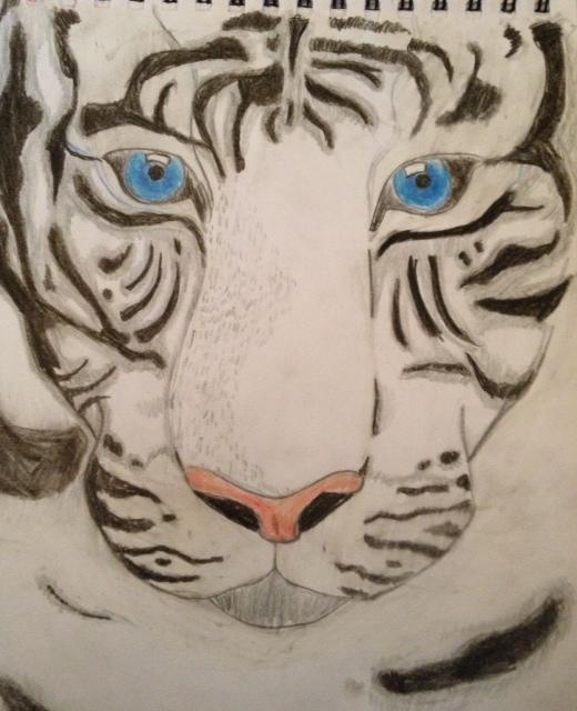 tiger1.JPG