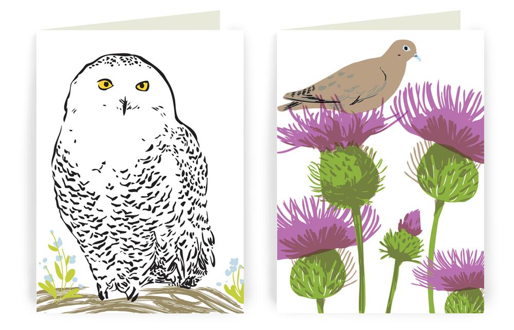 owl-dove.jpg
