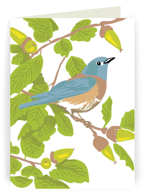 Bluebird and live oak greeting card 6 pack rigel stuhmiller bluebird and live oak greeting card 6 pack m4hsunfo Image collections