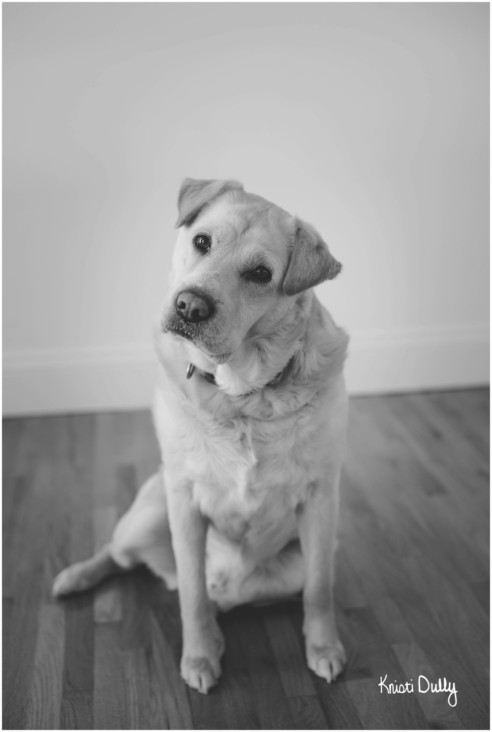 This is Beau. He is a 7 year old Shar Pei/Lab mix.