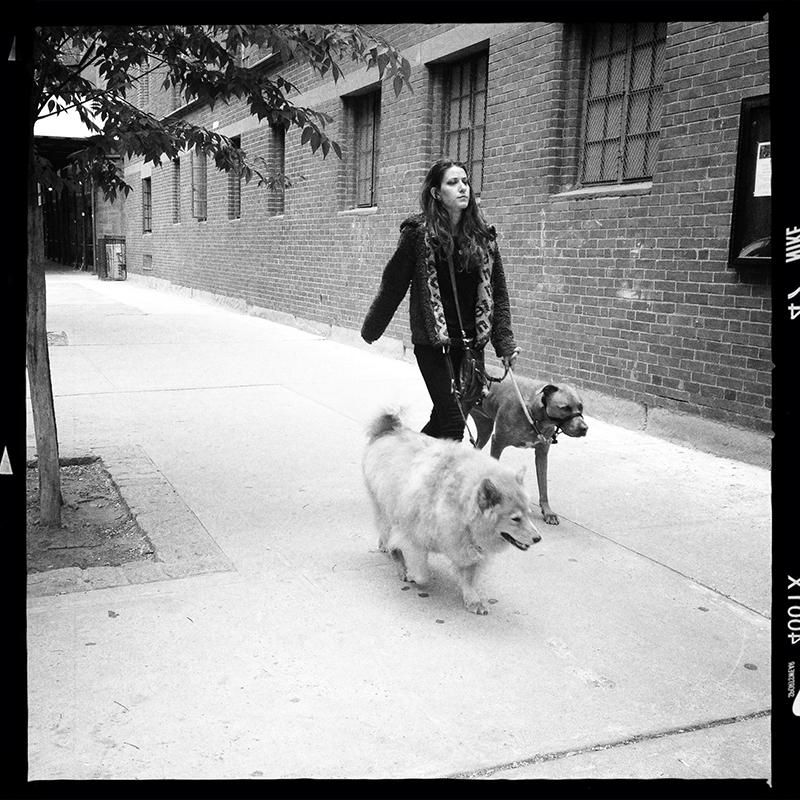 Dog walker - NYC