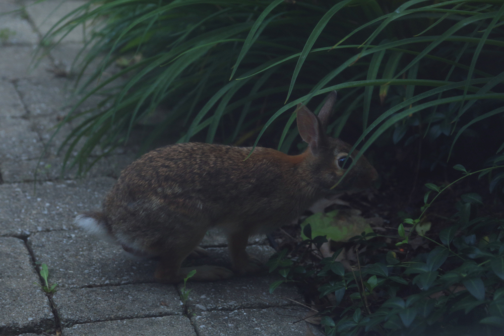 Here is the rabbit who was looking for the rabbit in hiding