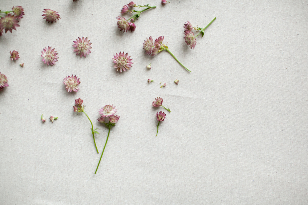 Lifestyle | Flowers | Kate Stafford Photography
