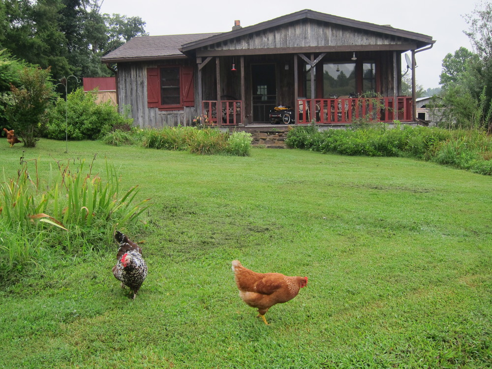 My cabin at Beth and Garry's. And 2 of their 10 chickens.