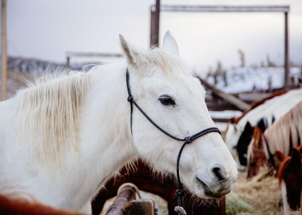 Shelby Knick_C Lazy U Ranch_-2.jpg