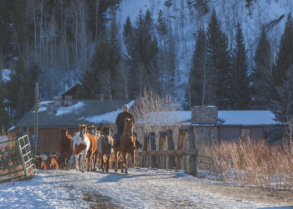 Shelby Knick_C Lazy U Ranch_-15.jpg