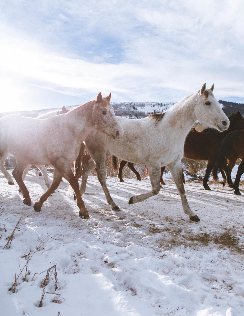 Shelby Knick_C Lazy U Ranch_-24.jpg