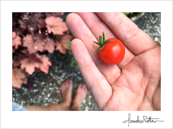 The first cherry tomato.
