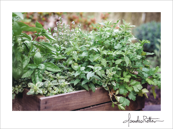 My box of herbs.