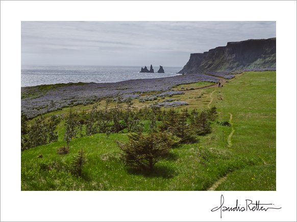 Hiking trail, Vik, Iceland