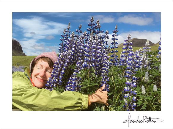 Hugging the lupines