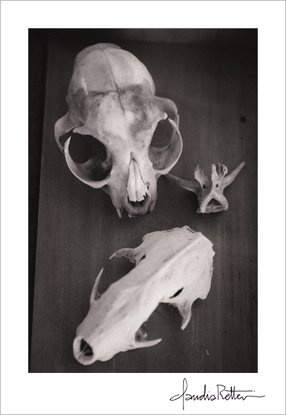 Little animal skulls