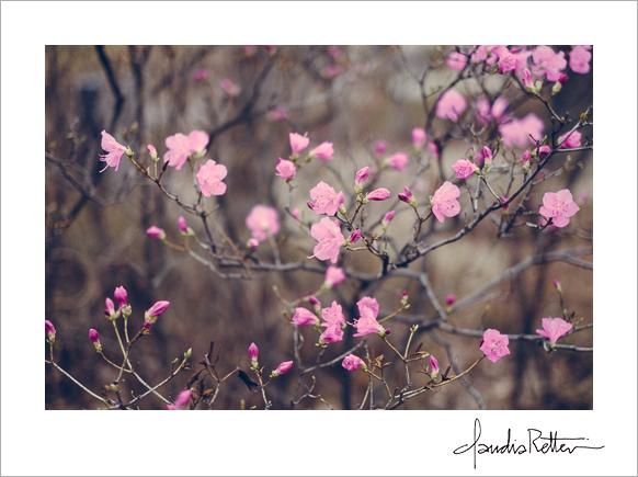 Seoul spring flowers