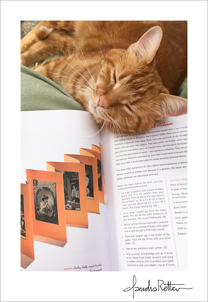 My cat, Sherman, helping out with research.