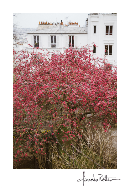 Blooming tree, Montmartre