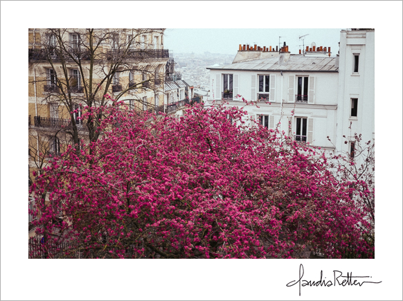 Bright pink tree, Montmartre, Paris