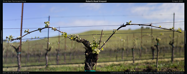 Robert's Road • Pinot Noir • Pommard Clone
