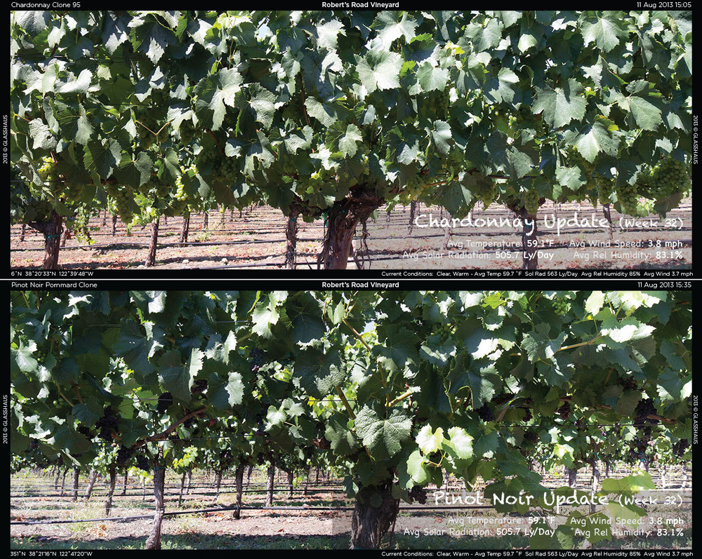 2013-08-12 Week 32 Winegrowing Update