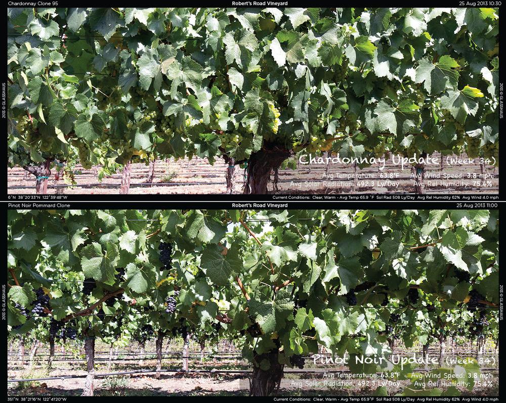 2013-08-25 Week 34 Winegrowing Update