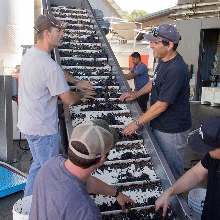2013-08-29 Fedrick Harvest Sorting