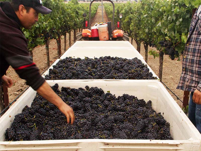 We build relationships with top-notch growers with award-winning vineyards because   Great Fruit   can make   Great Wine  .