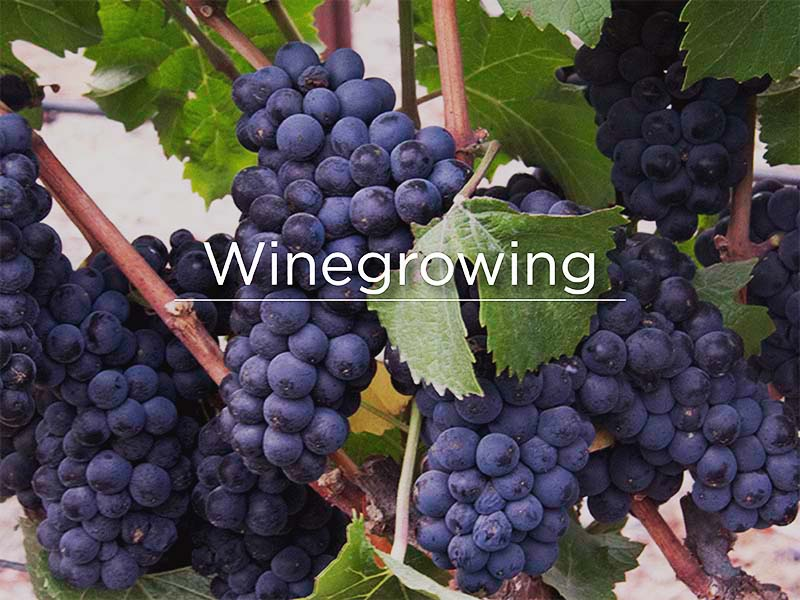 Winegrowing800x600.jpg