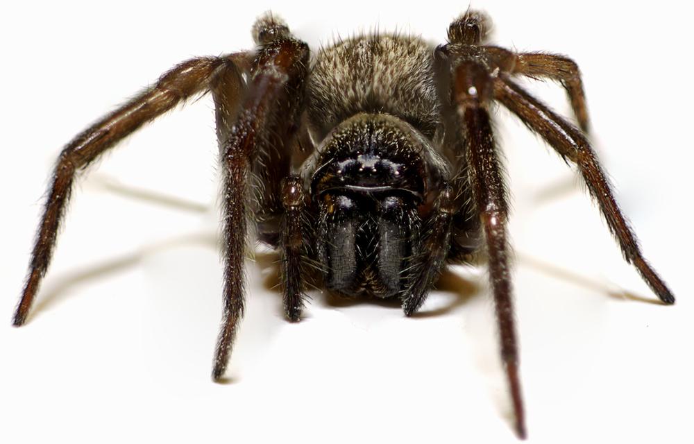 Macro Spider-100.jpg