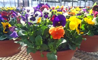 Lynde_GardenCenter_Spring3.jpg