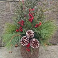 12-1pm: Spruce Tip Pot