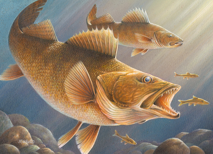 2013 Minnesota Walleye Stamp winner