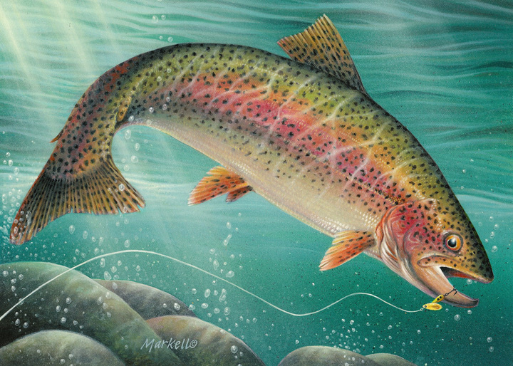 2012 Minnesota Trout & Salmon Stamp winner