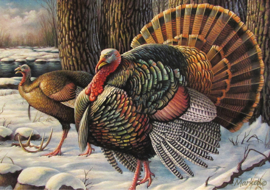 2016 Minnesota Wild Turkey Stamp winner
