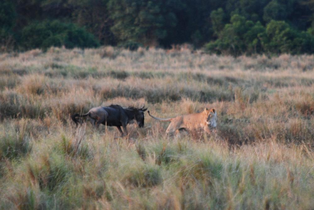 Day 3 - The Wildebeest Strikes Back