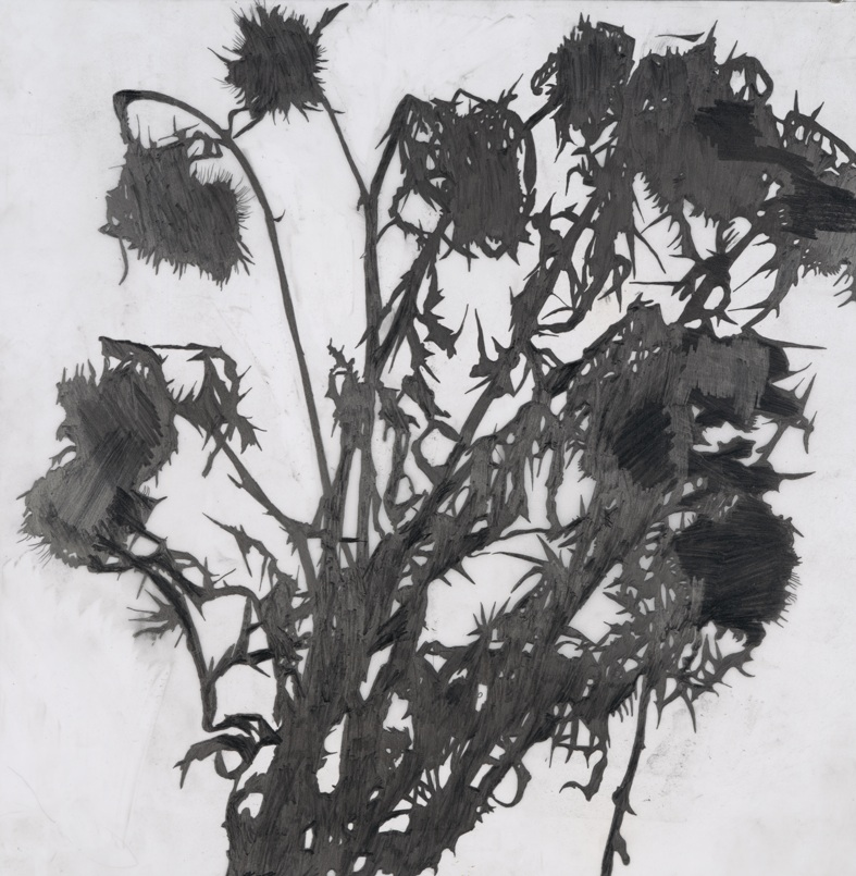 THISTLE (Cardo), 2010