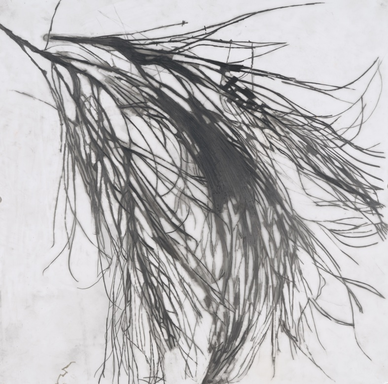 Zahara de los Atunes, 2009